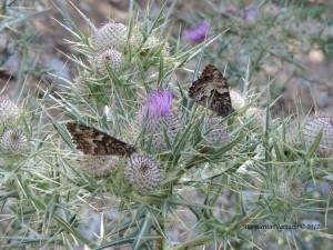 Ogni stagione ha le sue farfalle