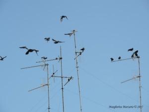 Nell'immensità del cielo come gli uccelli